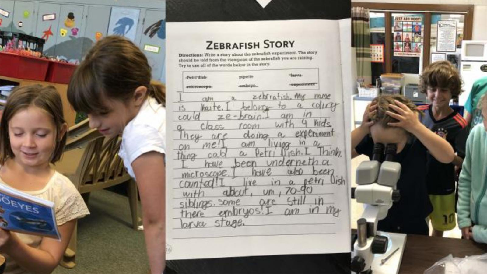 Picture of story about zebrafish written by a student