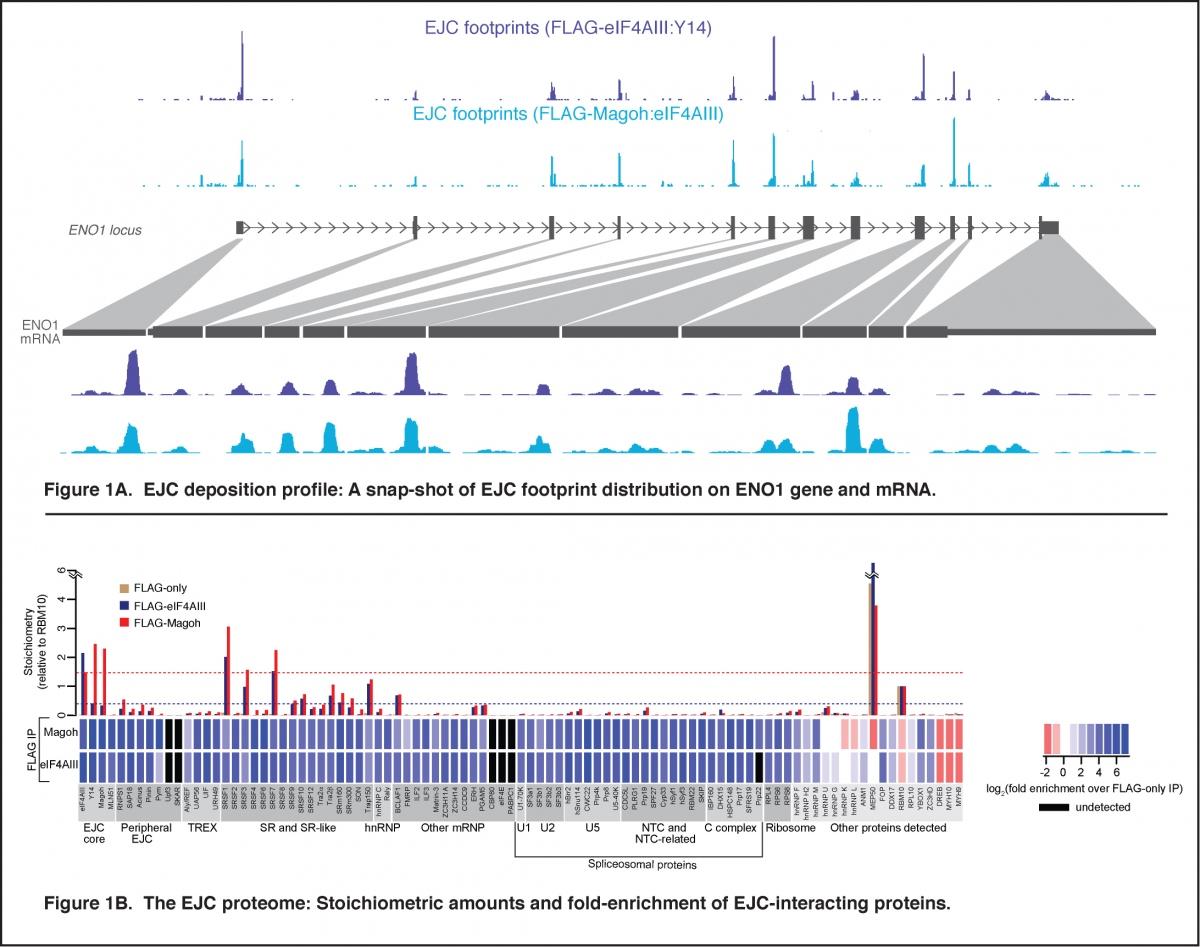 Guramrit Singh Department Of Molecular Genetics Example State Diagram Courseoffering Figure 1 Et Al Cell 2012